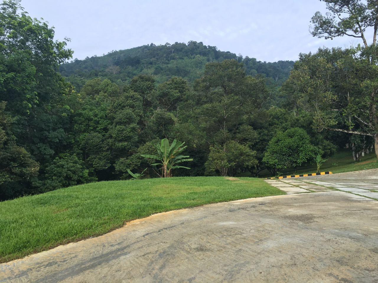 Lush greenary environment