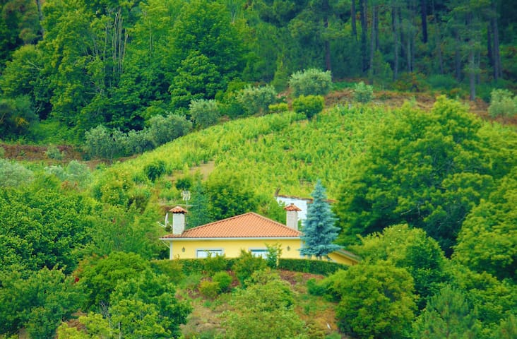 Relax + Pool + Paradise + Douro - Portugal - Santa Marta de Penaguiao  - Haus