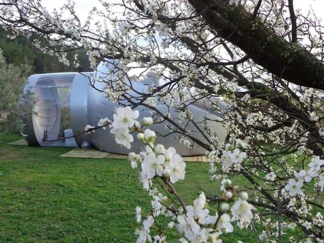 Les chambres bulle du château belvize - bize Minervois