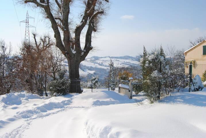Una delle grandi QUERCE in  inverno