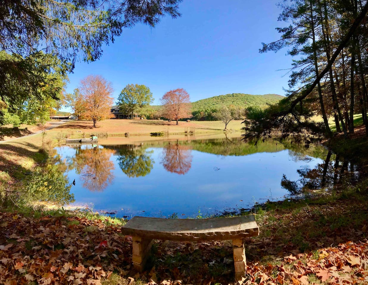 The pond in fall