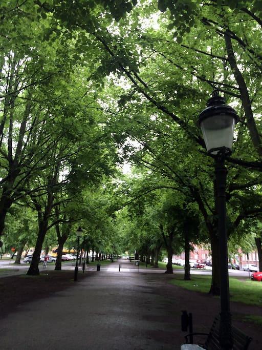 Närliggande gata och park.