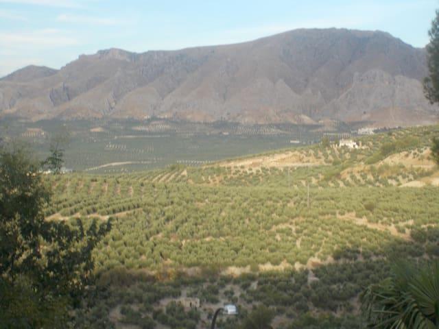 LOS OLIVOS DE SIERRA MAGINA - Jimena