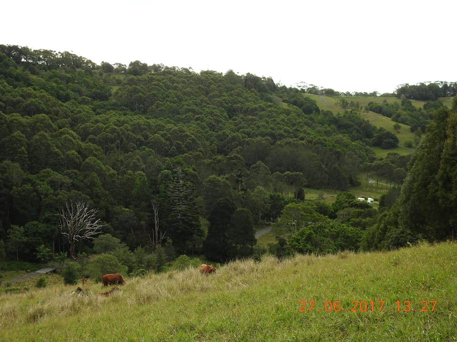 View of farm and forest
