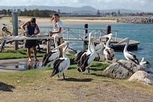 The locals enjoy  watching your success when fishing !!