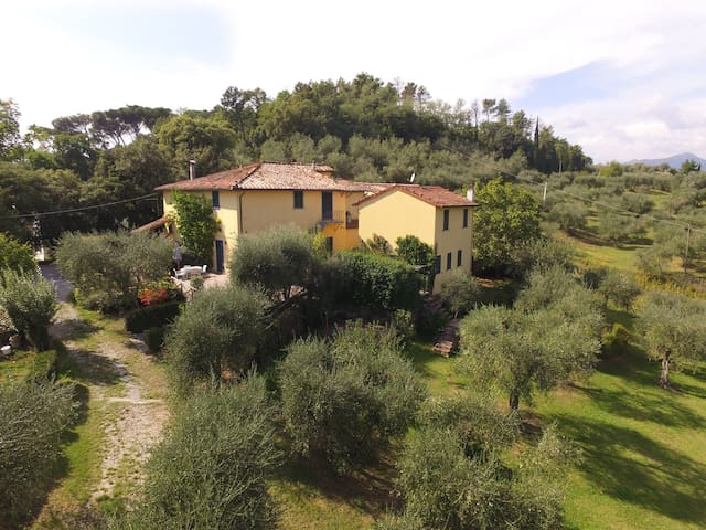 Lovely apartament not far to Lucca - Lucca - Apartment
