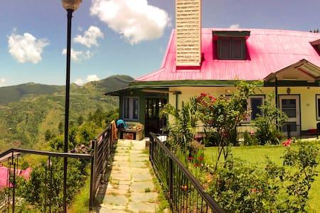 Himalayan Orchard Green Wing - Shimla