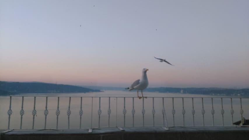 İstanbul Boğazı manzarası eşliğinde çatı katı. - Sarıyer - Loft
