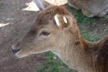 zoo de murcia