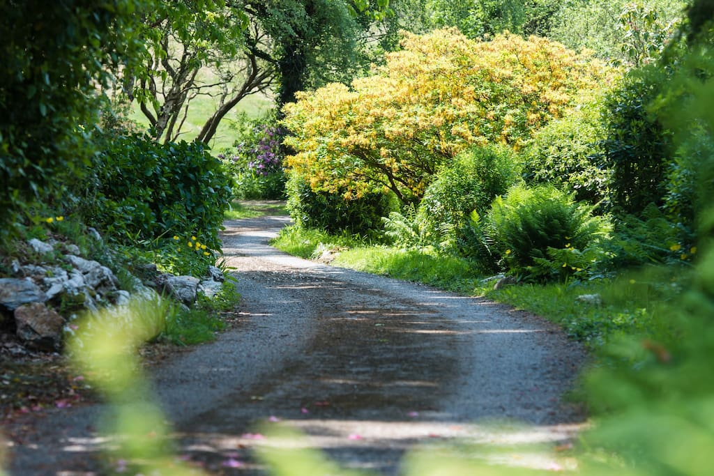 Driveway view nearer the house