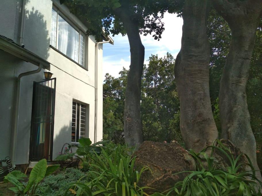 The front door amid the lush garden.