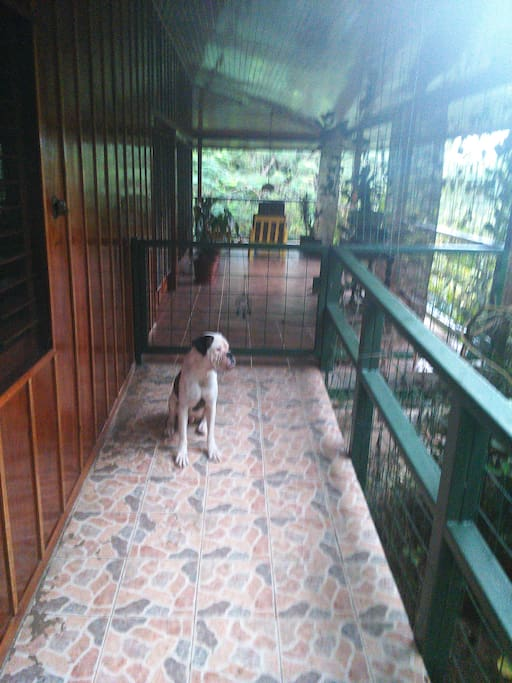 getting in the chalet Bo my boxer followed me