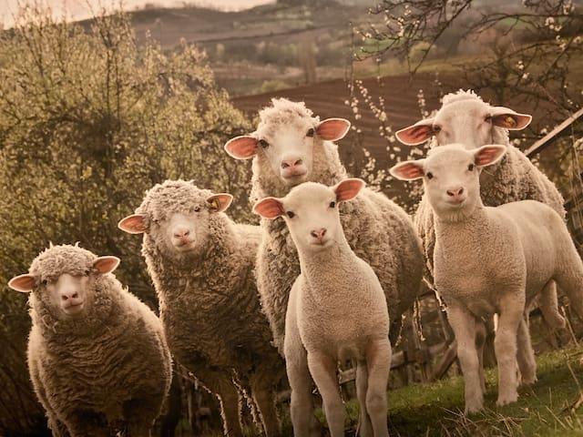 Le Mouton à 5 Pattes Aubagne-Cassis-Aix enProvence