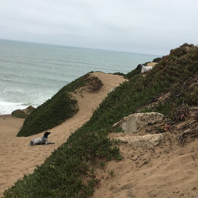 Fort Funston is a 30 minute drive for a wonderful off-leash walk with your dogs