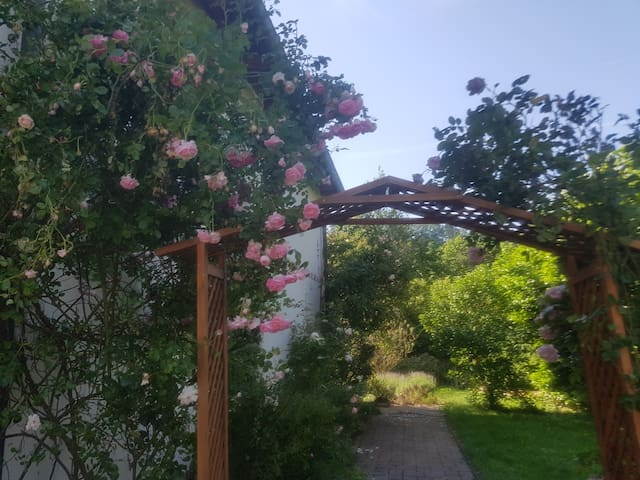 Die Wohnung ist eingerahmt von Rosen