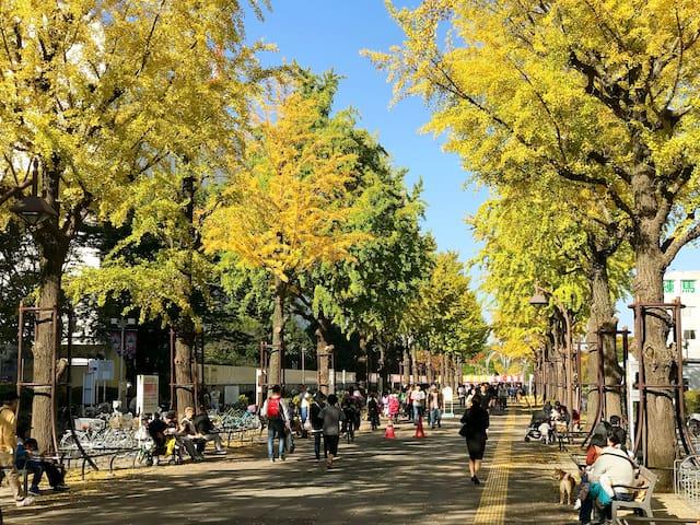 【日式民宿】离市中心交通便利超高性价比东京一室一厅