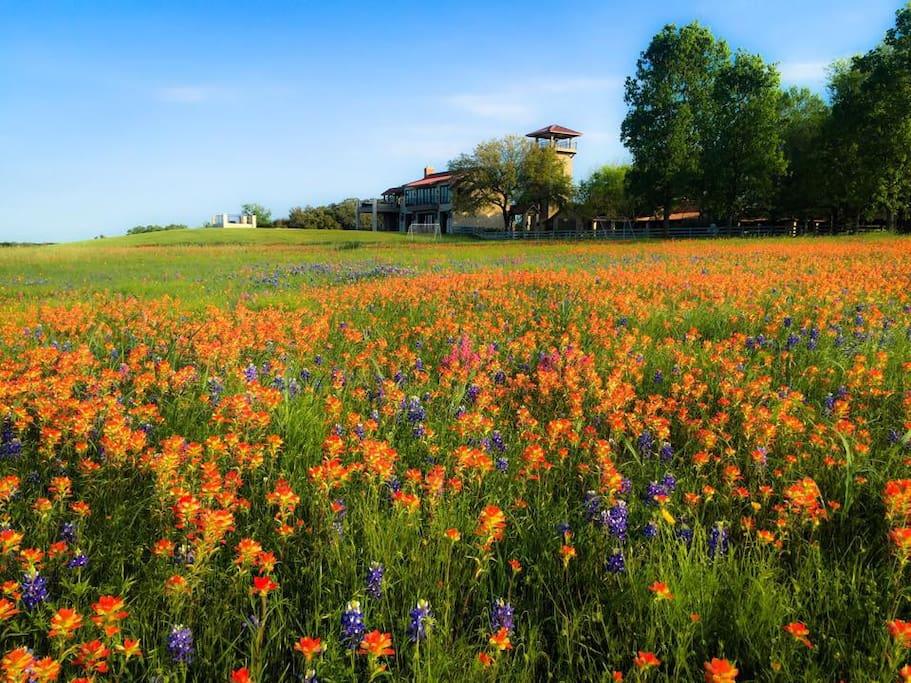Permavista ranch case in affitto a brenham texas stati for Costruttori di case in stile ranch in texas