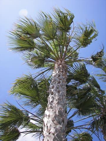 Les Palmiers du jardin