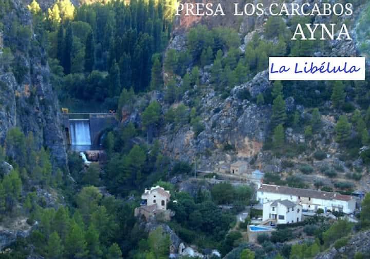 Libélula, rio mundo,Cárcavos Ayna Albacete