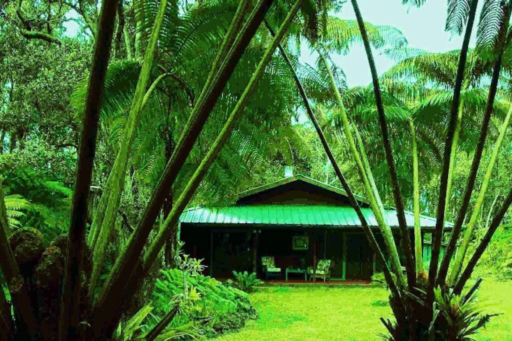 Anthurium Alii Gardens Rainforest In Volcano Houses For Rent In Volcano Hawaii United States