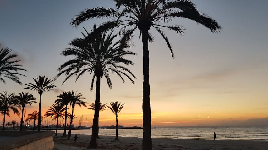 Near the Palma beach!!!!
