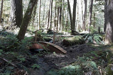Sol duc rainforest  tent or car camping spot 5