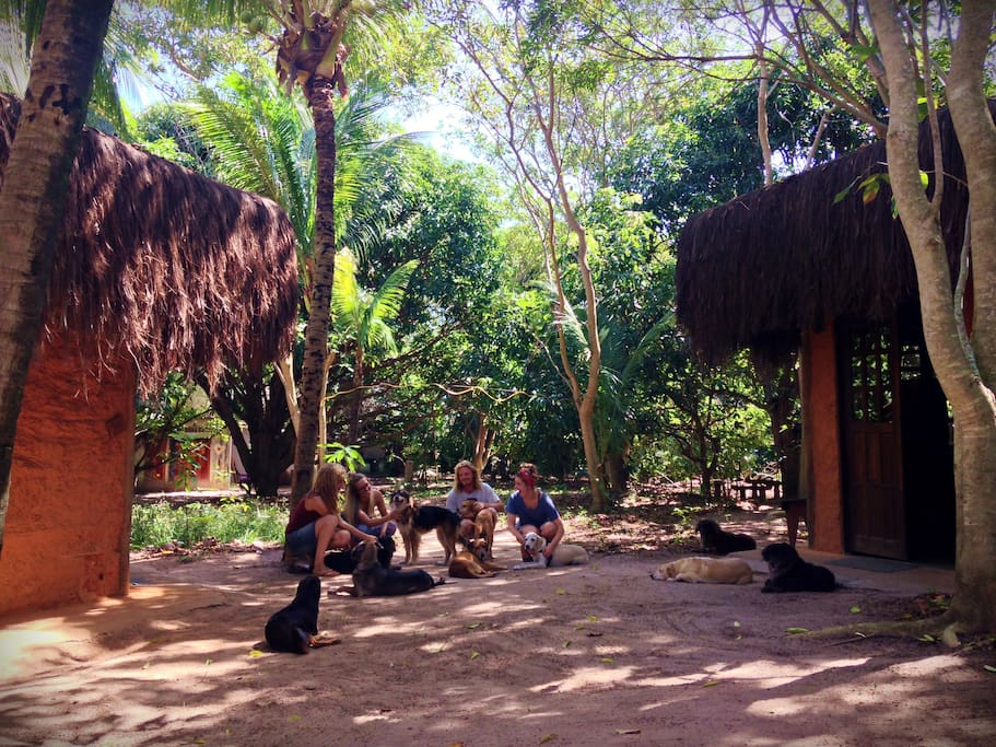 The Retreat offers two little ecological earth lodges constructed in a traditional Native Indian style with thatched roofs, but equipped with modern facilities and internet access... Bahia_Brazil.