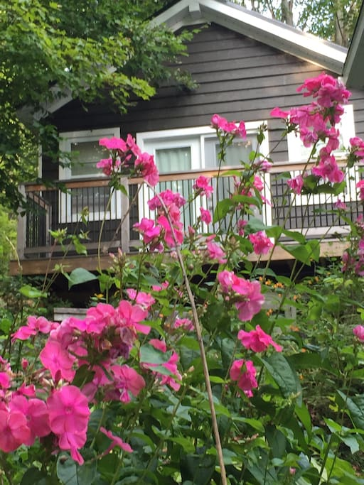 New private bunkie sleeps 3-4 or small family