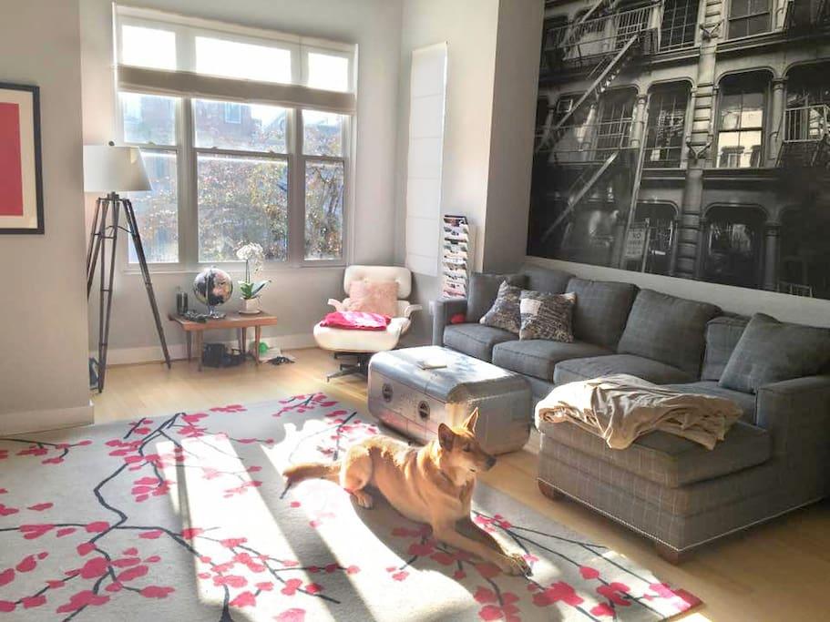 Shared Living Room & Tucker!