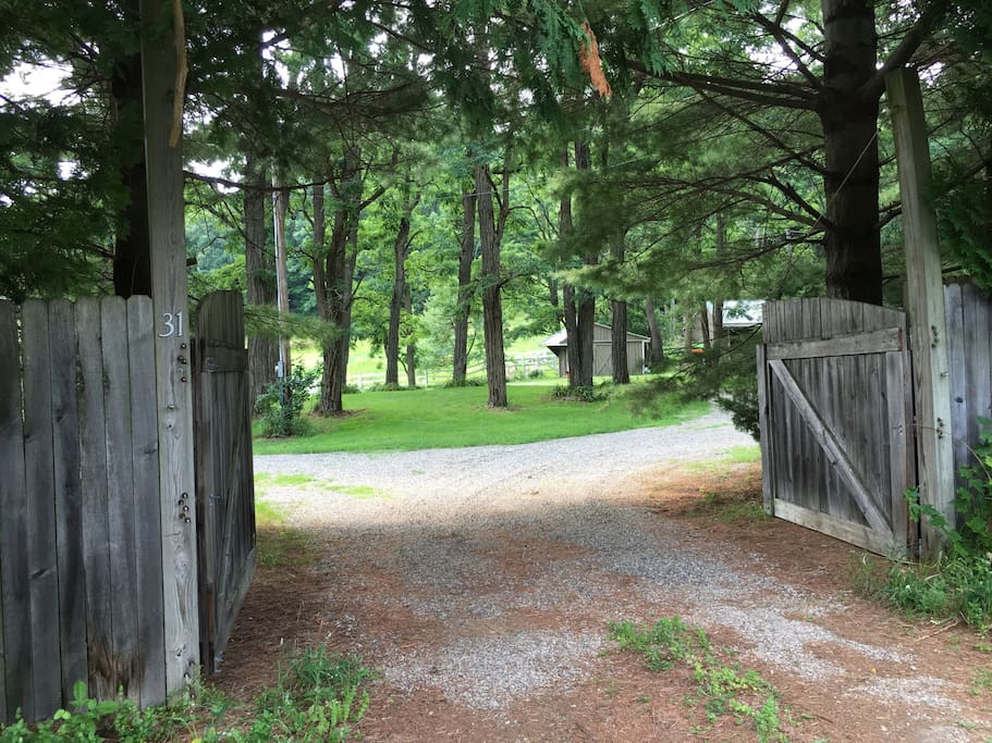 Gated entrance to circular drive around locust tree stand