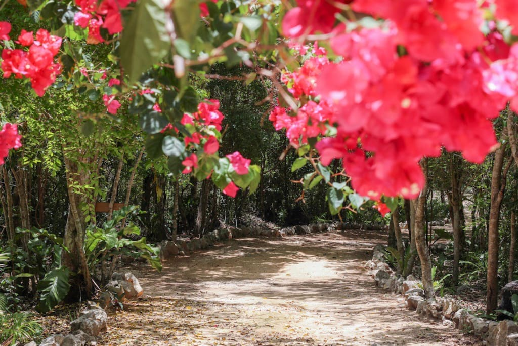 Down a Lush Jungle Road...