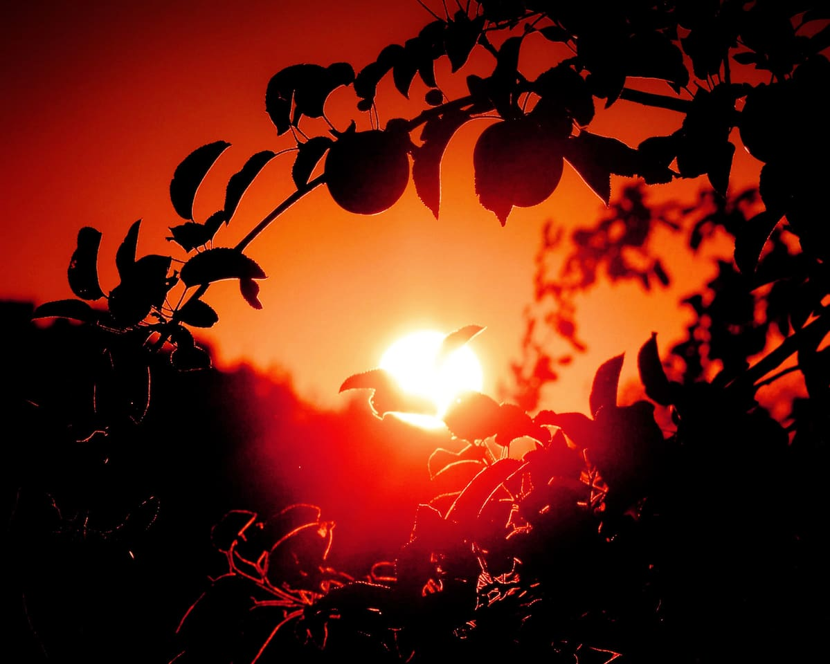 Spectacular orchard sunsets