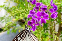Butterfly in the garden. There is a Butterfly Garden in Sta. Fe well worth a visit.