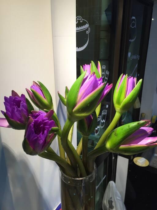每周都有不一样的鲜花