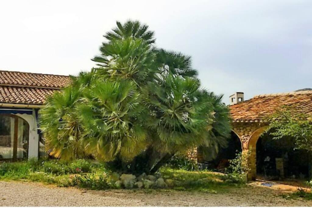 Jardín exterior con una espectacular palmera