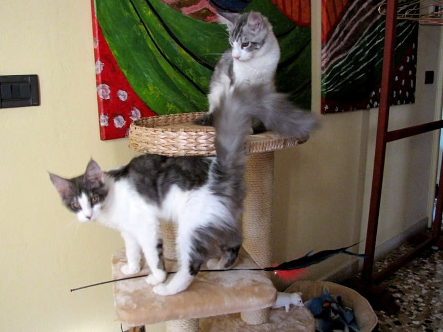 My cats : Diego and Frida