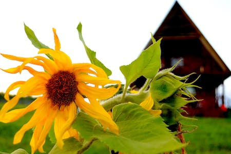 Агроусадьба Подсолнухи - Braslaw - Nature lodge