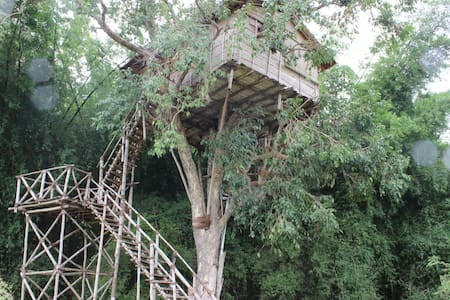 Living on the edge: Treehouse in the Jungle - Masinagudi