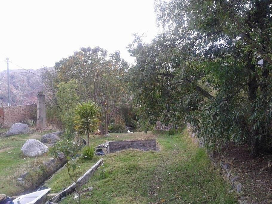 El jardin de atrás