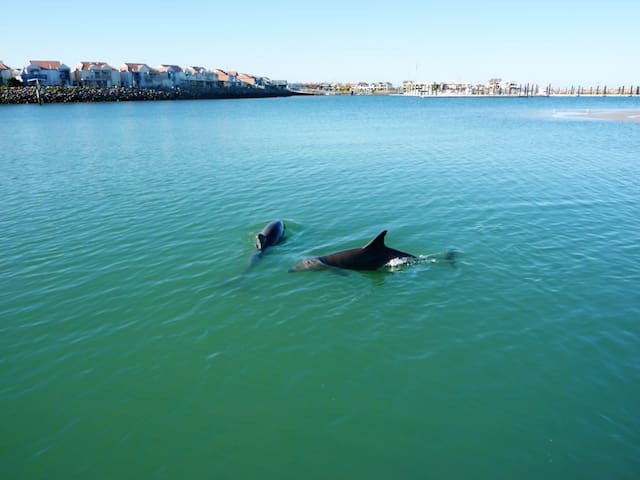 Dolphins in the marina