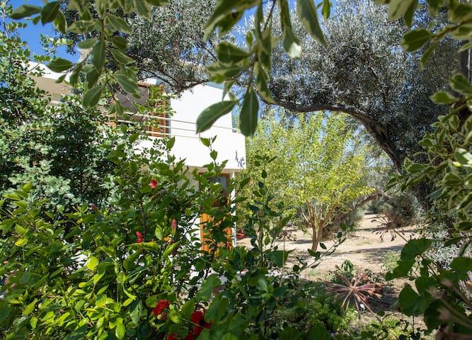 """Olive leaves rustling 2""    Loutra Rethimno Creta"