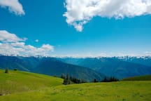 Head to Olympic National Park and hike the unspoiled wilderness of Hurricane Ridge.