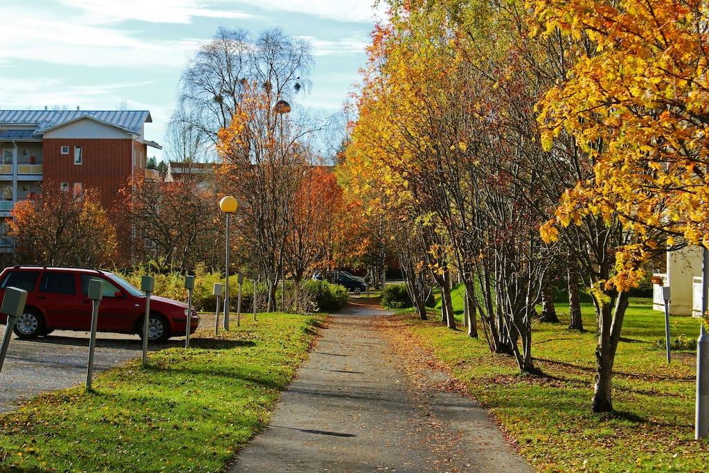A photo of the neighborhood in Autumn.