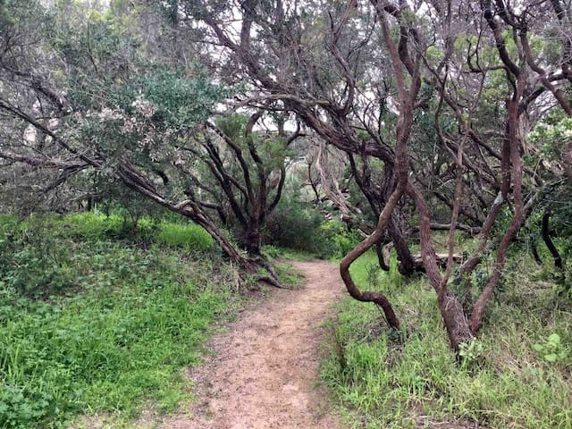 Coastal Indigenous trees lining Lovers Walk.