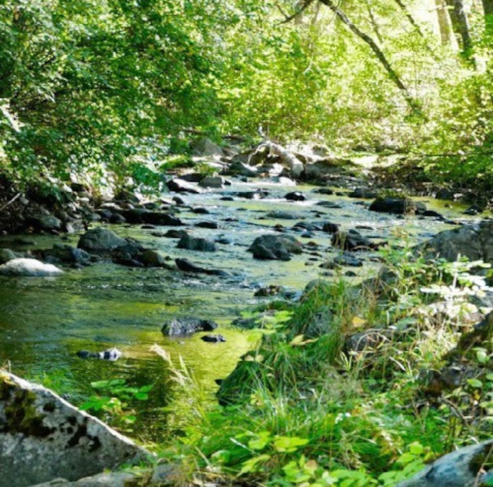 peaceful rivers flow