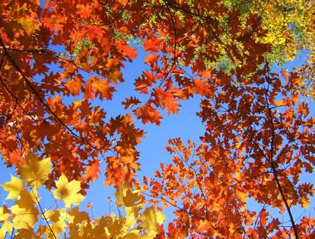 Fall Foliage - Late September Through the Third Week in Oct. - Altitude and Latitude Dependent