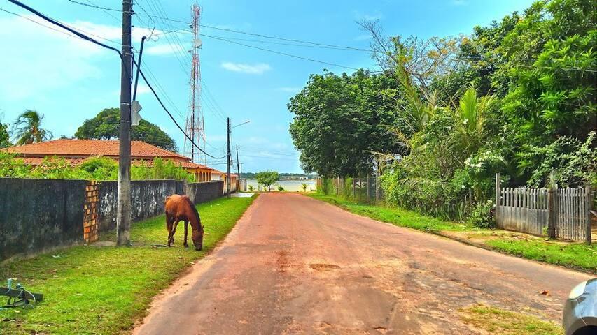Rua tranquila e próxima do rio Paracauari. Aqui você vê a rua, o portão da casa (a direita) e o rio ao fundo. Cavalos e búfalos são vistos circulando na cidade.
