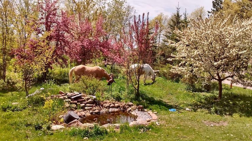 Rustic Retreat Must love animals