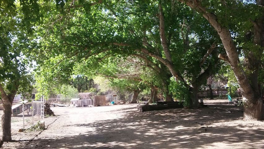Tranquility Ranch Under the Trees - Los Lunas