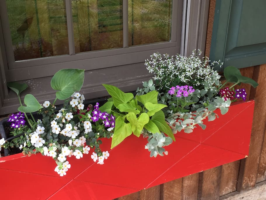 Window boxes welcome summer